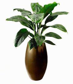 Grote groene planten in potten | Chicplants