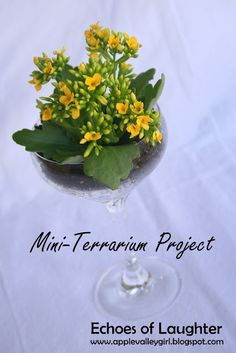 Mini terrarium made in a champagne flute. So cute for a table, or for a party favour, or a cute take home.