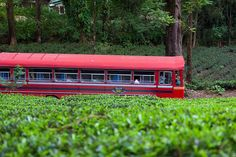 Aross tea plantation near Nuwara Eliya, Central Province, Sri Lanka… Sri Lanka, Native Country, Bus, Tour Operator, See Picture, Far Away, Maldives, Beautiful Landscapes, All Over The World