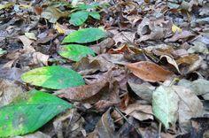 Path by green leafs