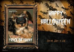 Happy Halloween all our friends by dagutzyone's , via Flickr