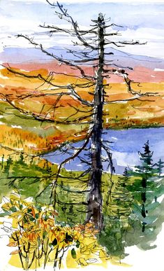 Lots of nice watercolors on this blog.