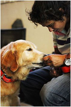 Les amateurs de chiens l'affirment depuis des années et la science le confirme depuis peu : les chiens sont plus intelligents qu'on ne le croit. Ils peuvent saisir nos indices, montrer le lien affectif qui les unit à leur maître, et même manifester de la jalo...
