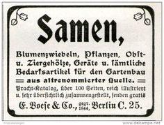 Original-Werbung/ Anzeige 1911 - SAMEN / BLUMENZWIEBELN / BOESE & CO. BERLIN  - ca. 55 x 45 mm