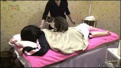 Blog Viiish - Profissão do gato Mais aqui oh: http://www.blogviiish.com.br :D