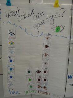 First Grade Garden - The Five Senses Eye Colour Graph