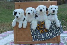 Puppies overload