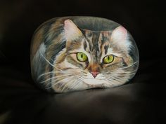 """""""Chalie"""" ... Chat taby / Taby cat"""