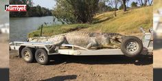 Ölümü savaş başlattı!: Avustralya'da öldürülmüş halde bulunan boyu 5 metrenin üzerindeki timsah, büyüklüğü ile çevre sakinlerini şaşırtırken, yaşlı timsahın ölümünün timsah grubu içinde bir liderlik savaşı başlatacağı söyleniyor.