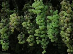 Weeklong Wine and Food Tour in Umbrian Countryside -- Orvieto, Viterbo, Italy -- Find more wine and food events on LocalWineEvents.com