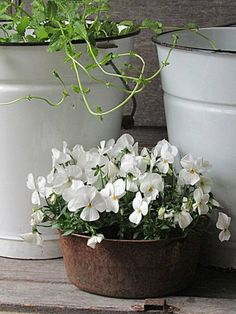 Container gardening is a fun way to add to the visual attraction of your home. You can use the terrific suggestions given here to start improving your garden or begin a new one today. Your garden is certain to bring you great satisfac Indoor Gardening Supplies, Container Gardening, Rustic Flowers, White Flowers, Pot Jardin, Red Geraniums, Pot Plante, Moon Garden, White Gardens