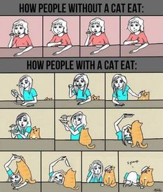 32 Hilarious Struggles Only Cat People Can Understand! - Imgur
