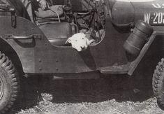 "reckon-sort: ""General Patton's Bullie, Willy wwii veteran; March 1944-Decemer 1945 """