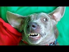 Farting Dogs Making Funny Faces