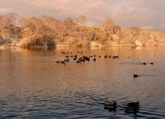 High Park ~   The 35 acre Grenadier Pond is rumoured to be 'bottomless' since its depth can't be accurately measured due to its muddy floor. Legend says that British Grenadiers fell through its thin ice while crossing the pond to defend the city in the War of 1812.