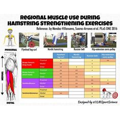 #Prevention ⚽️🏉💨 Regional Muscle Use during Hamstring Strengthening Exercises💡👍🏻 #sport #muscle #prevention #strength #soccer #sprint #rugby #football #sportscience #sportsmedicine #infographic