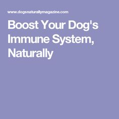 Boost Your Dog's Immune System, Naturally