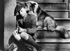 "Lassie (""Lassie Come Home"")  Even though the character of Lassie was supposed to be a female, Pal, the dog who played the part, was a male. Now that's range. So much so that MGM paid Pal more than co-star Elizabeth Taylor."
