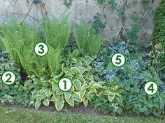 pied dun mur à lombre (Scènes de jardins) Garden Trellis, Balcony Garden, Garden Paths, Garden Landscaping, Landscaping Ideas, English Landscape Garden, Backyard Ideas For Small Yards, Plantation, Shade Plants