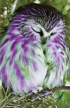 beautiful birds This feathered beauty is purest heaven! Exotic Birds, Colorful Birds, Beautiful Owl, Animals Beautiful, Pretty Birds, Love Birds, Baby Owls, Cute Baby Animals, Owl Pictures