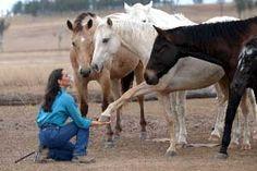 Natural Horse World Horsemanship - What is Natural Horsemanship?