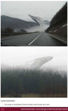 the rare humpback forest whale.<< I thought it was a dragon Funny Cute, The Funny, Hilarious, Tumblr Stuff, Funny Tumblr Posts, Izu, Haha, Just For Laughs, I Laughed