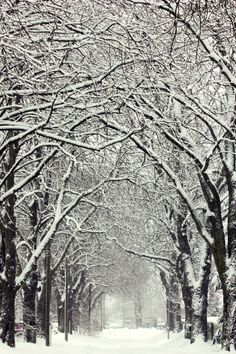 Tree-lined avenue on a winter day (Germany) by nettisrb ❄️