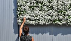 A green wall for indoor & outdoor use. Belgian design for you!