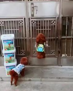 Credit thepuppiesclub Best Picture For Cutest Baby Animals videos For Your Taste You are looking for Cute Funny Dogs, Cute Funny Animals, Cute Baby Animals, Animals And Pets, Funny Animal Memes, Funny Animal Pictures, Cute Animal Videos, I Love Dogs, Animals Beautiful