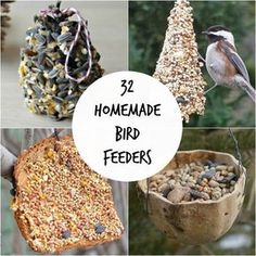 Homemade bird feeders are a great way to channel your inner innovator and experience nature!