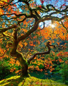 Curling tree with bright colors - Beautiful nature images, photos and pictures of trees and forests, landscape photographs. Nature photography that takes your breath away...