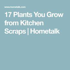 17 Plants You Grow from Kitchen Scraps | Hometalk