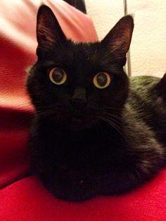 Im watching you… - http://cutecatshq.com/cats/im-watching-you-2/