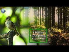Relax, Bird, Outdoor Decor, Drill Bit, Music, Birds