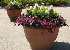 Planter Pots, Terracotta