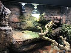 Reptile Habitat, Reptile Room, Reptile Cage, Reptile Enclosure, Happy Animals, Zoo Animals, Animals And Pets, Bartagamen Terrarium, Bearded Dragon Vivarium