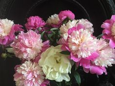 Beautiful peonies picked from a Central Otago cottage garden - one of the delights of spring in Central Otago.