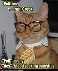 politicians beware of cats