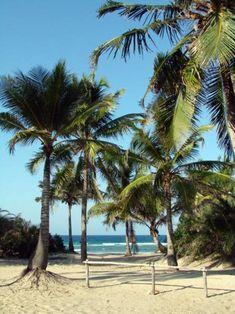 Praia da Barra - Moçambique Maputo, Mozambique Beaches, Nature Tree, New Journey, Beach Scenes, Tropical Paradise, Africa Travel, Ocean Beach, Terra
