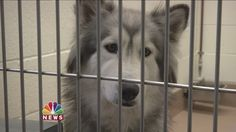 County Grabs 50 Dogs in North Shore Sweep