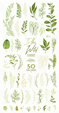 In the Wild. 50 Individual watercolor floral Elements leaves