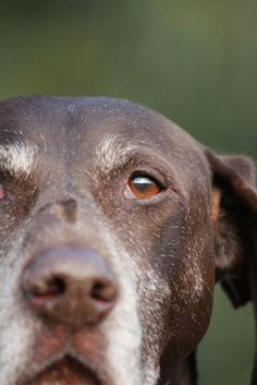 proud senior dog. Our love of dogs continue well after they are puppies. Their love and companionship is unconditional
