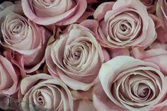 Secret Garden roses at New Covent Garden Flower Market - August 2015 Types Of Flowers, Cut Flowers, New Covent Garden Market, Fragrant Roses, Flower Names, Love Rose, Flower Market, Flower Of Life, Pink Roses