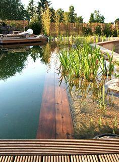 a Schwimmteiche natural pool