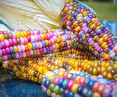 Cheap plants for homes, Buy Quality corn seeds directly from China seeds vegetables Suppliers: 20 pcs/bag rainbow corn seeds Organic seeds vegetables sweet food edible seeds rare cereals Grain plant for home garden Fruit And Veg, Fruits And Veggies, Rainbow Corn, Colored Corn, Glass Gem Corn, Popcorn Seeds, Bokashi, Colorful Vegetables, Gardens