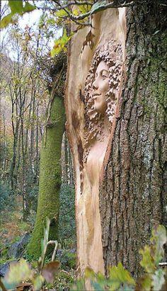 árbol seco tallado