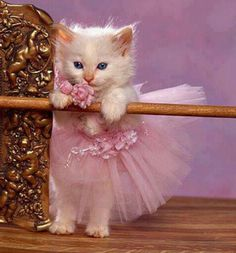 Pequena dançarina!