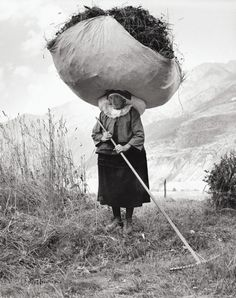 Haying in Cogne, 1959 by Pepi Merisio
