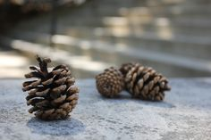 This shows asymmetrical balance by the large pine cone being on the left and a group of smaller pine cone on the right. even though they are different sizes they carry a similar value.