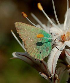 *Au coeur de l'asphodèle by Charlottess, via Flickr